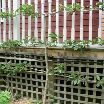 weeding, watering, picking and pruning