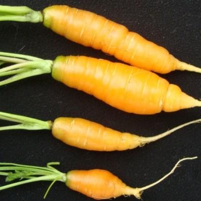 creative carrots