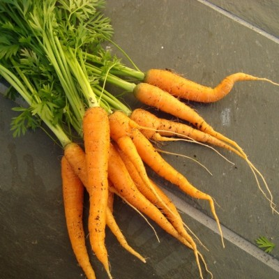 carrots by Christmas