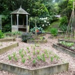 fresh food garden 2013