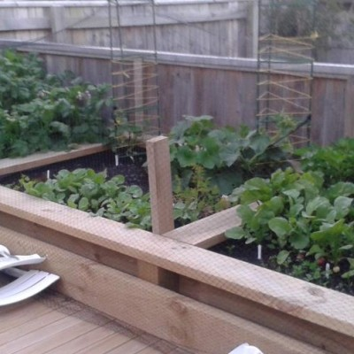 want a vegetable garden like this?
