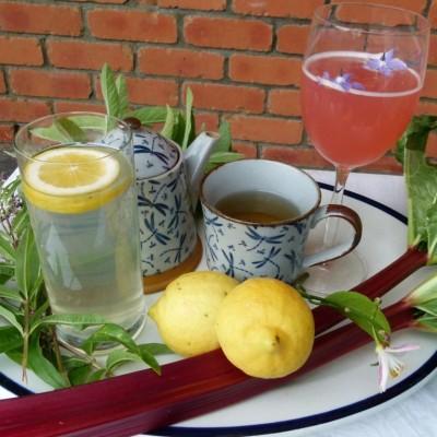 festive rhubarb cordial