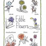 edible flowers graphic 2