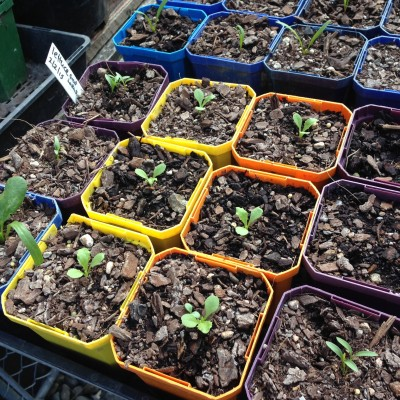 Stress avoidance for summer seedlings