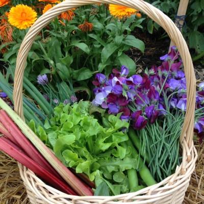 Pre-Christmas edible gardening