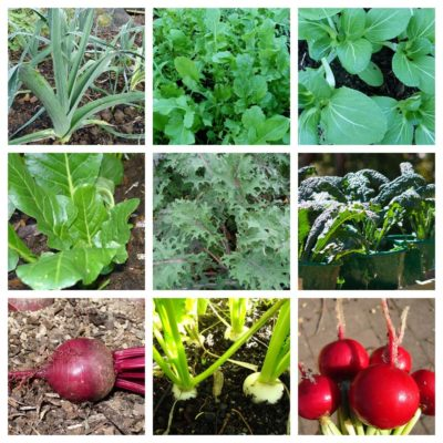 my top seven winter crops