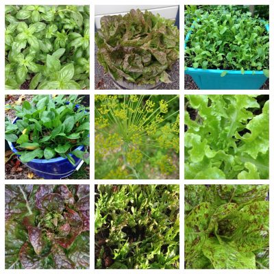 Salad and herbs in a small space workshop Saturday 9 March 2019 1:00 – 2:30pm