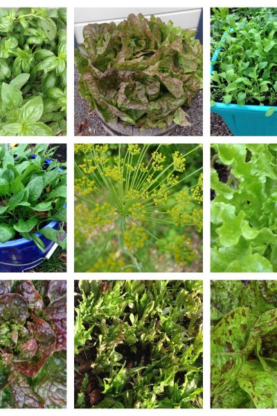 Salad and herbs in a small space workshop Thursday 8 November 2018 6-8pm