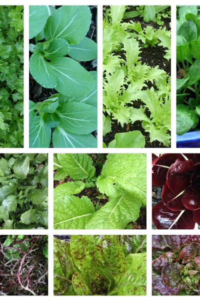 Sow your Summer Salad and Herbs Workshop Sunday 4 November 2018 1-2.30pm