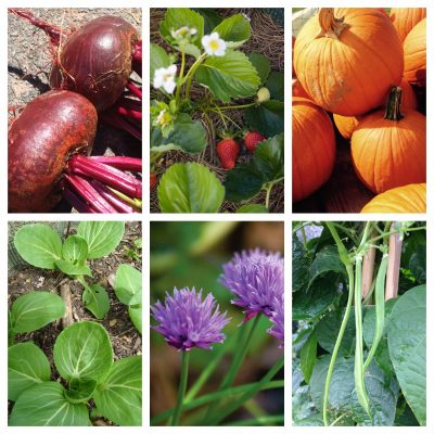 Seven superfoods to grow at home